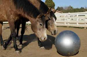 Two horses playing with an exercise ball