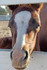 Contemplative horse