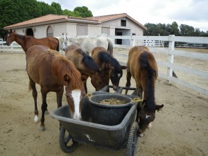Time to feed the horses!