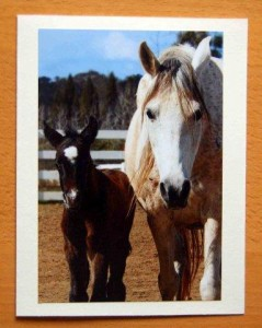 Pegasus Stationery Picture Card