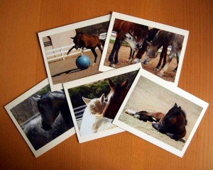 Pegasus Stationery Picture Cards